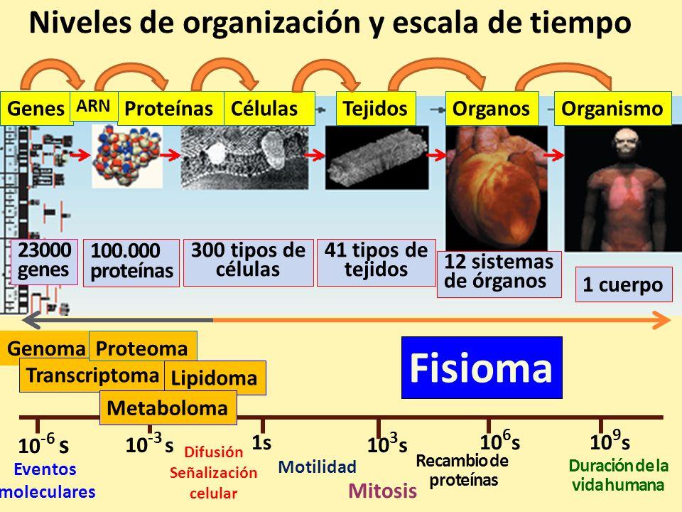 Fisioma Niveles de organización y escala de tiempo Genes Proteínas