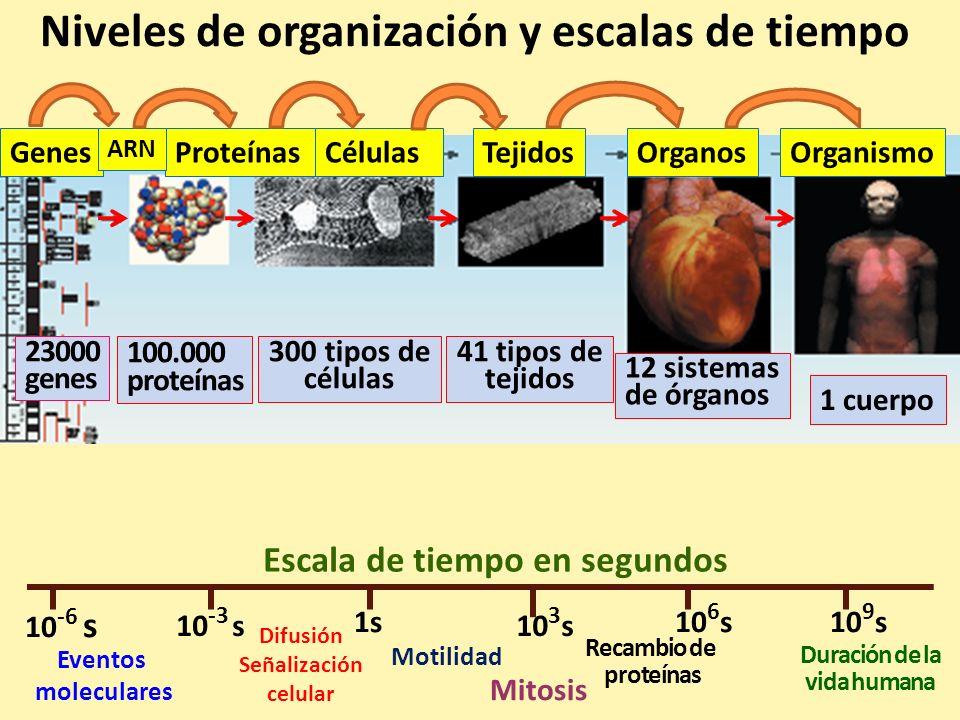 Niveles de organización y escalas de tiempo