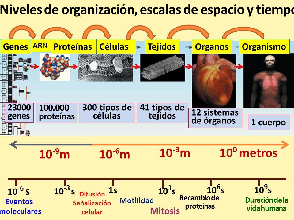 Niveles de organización, escalas de espacio y tiempo