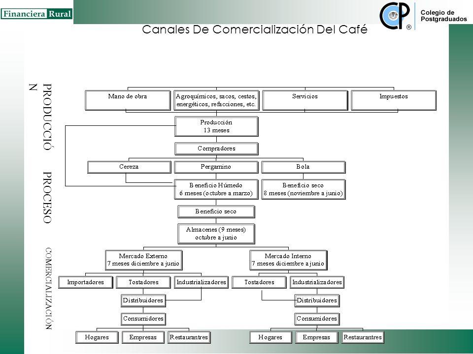Canales De Comercialización Del Café
