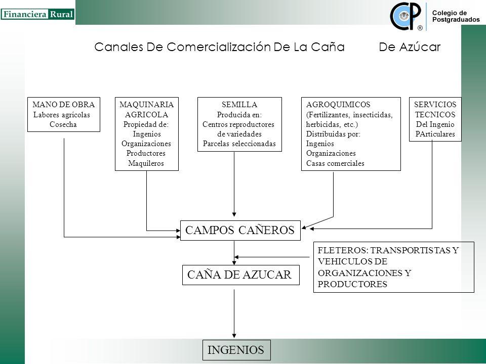 Canales De Comercialización De La Caña De Azúcar