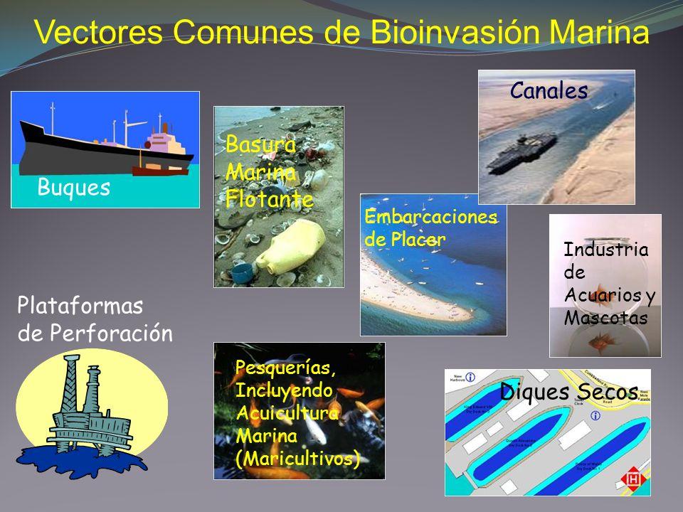 Vectores Comunes de Bioinvasión Marina