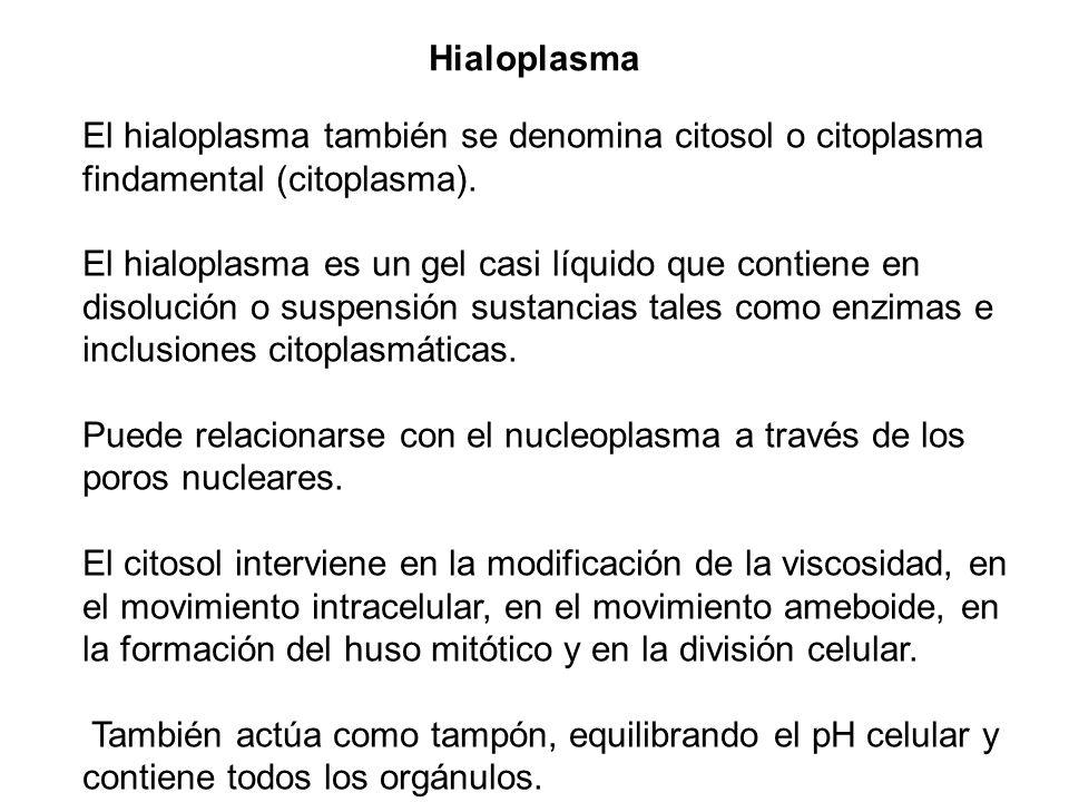 Hialoplasma El hialoplasma también se denomina citosol o citoplasma findamental (citoplasma).