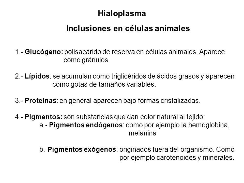 Inclusiones en células animales