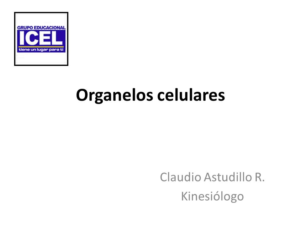 Claudio Astudillo R. Kinesiólogo