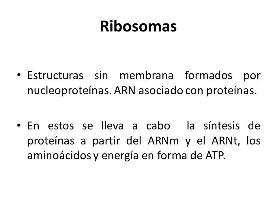 Ribosomas Estructuras sin membrana formados por nucleoproteínas. ARN asociado con proteínas.
