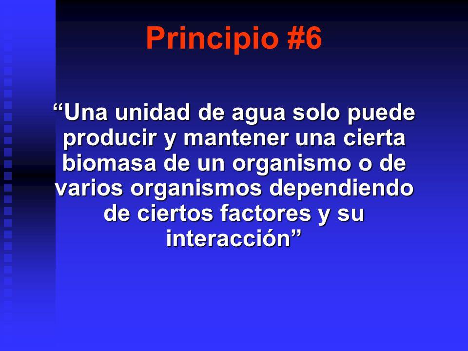 Principio #6
