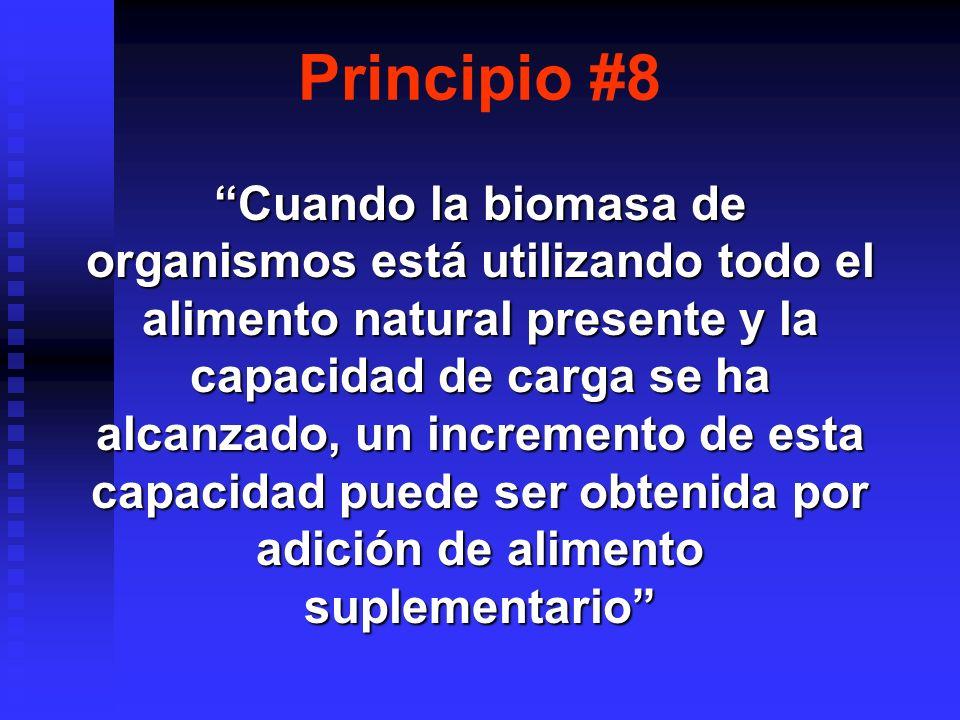 Principio #8