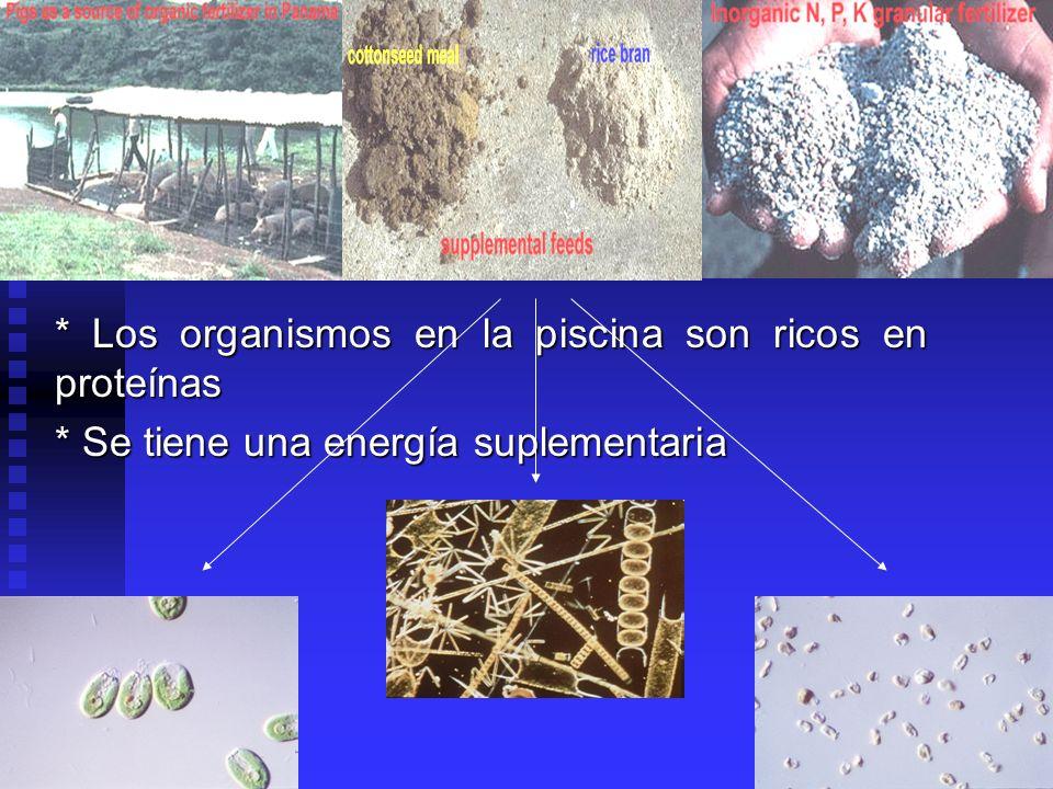 * Los organismos en la piscina son ricos en proteínas