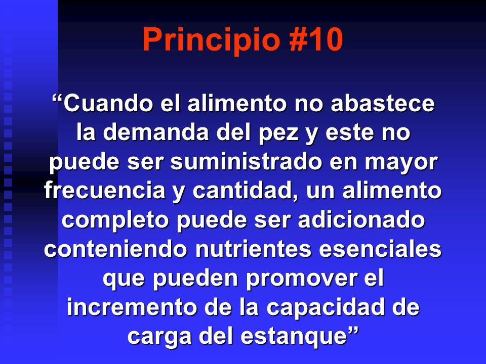 Principio #10