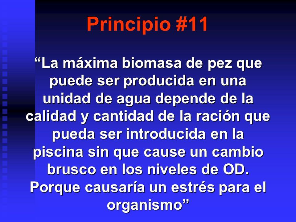 Principio #11