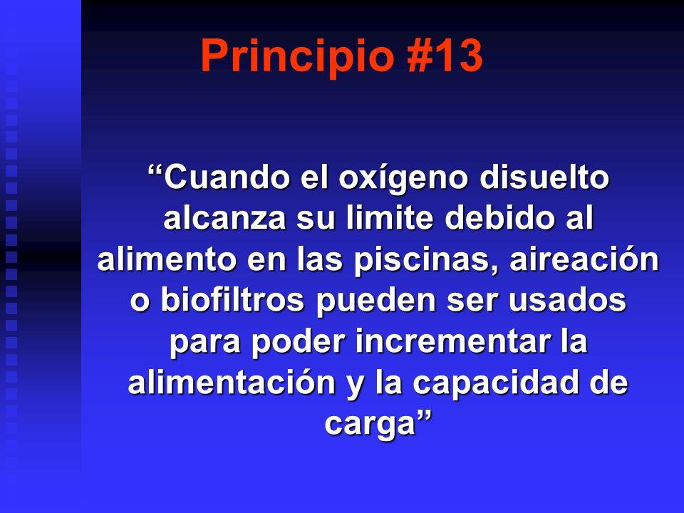 Principio #13