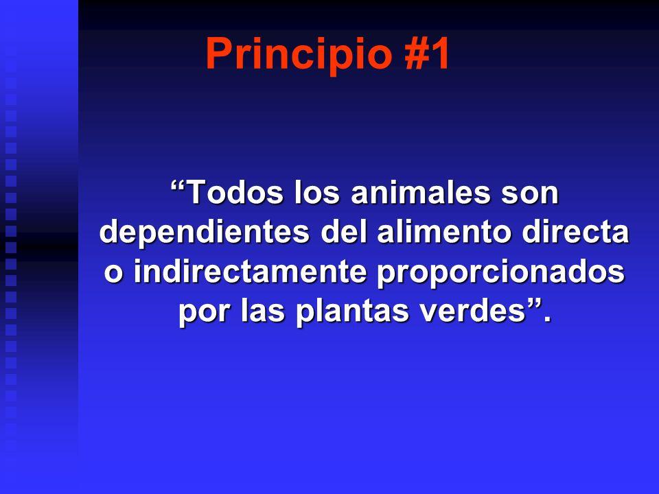 Principio #1 Todos los animales son dependientes del alimento directa o indirectamente proporcionados por las plantas verdes .