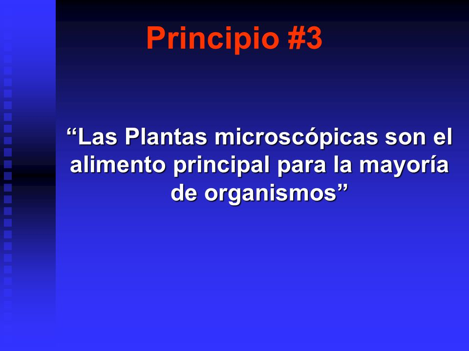 Principio #3 Las Plantas microscópicas son el alimento principal para la mayoría de organismos