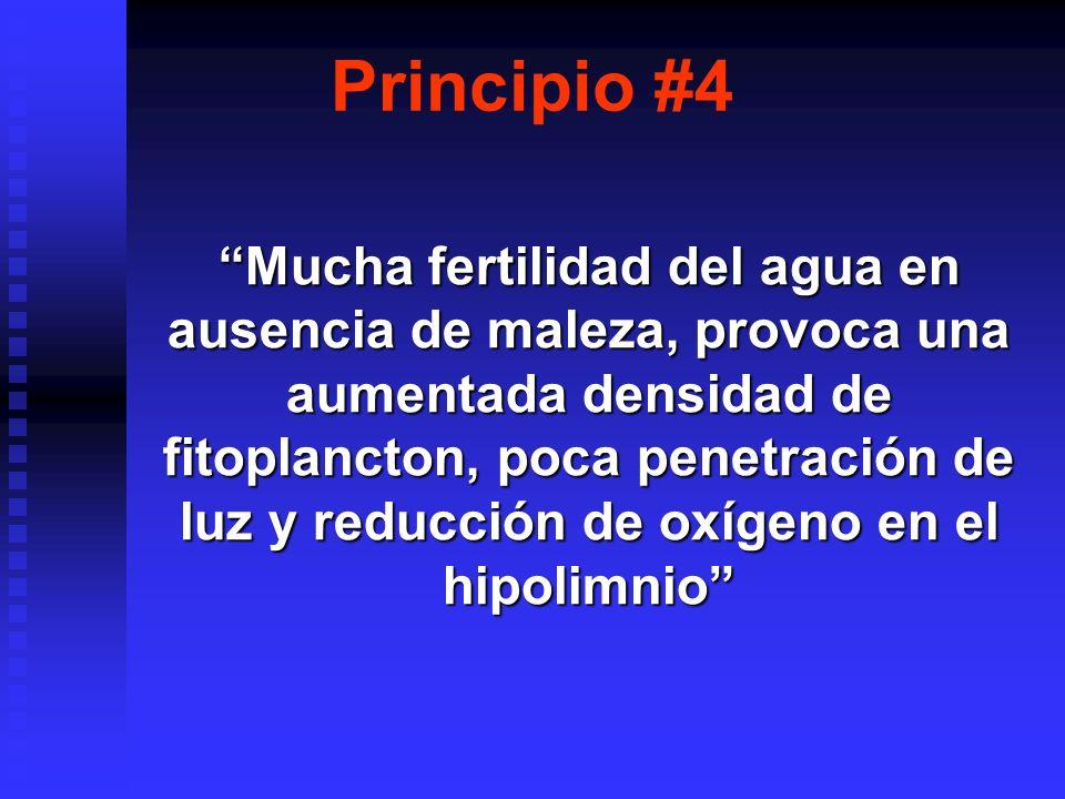 Principio #4