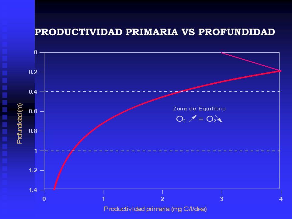 PRODUCTIVIDAD PRIMARIA VS PROFUNDIDAD