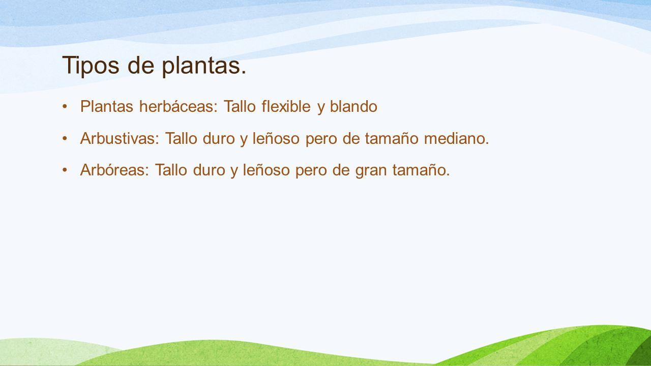 Adaptaciones en la reproducci n ppt descargar for Cuales son los tipos de plantas
