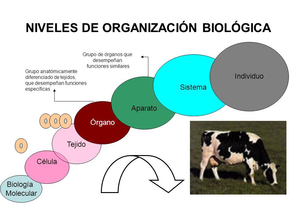 NIVELES DE ORGANIZACIÓN BIOLÓGICA