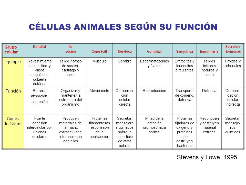 CÉLULAS ANIMALES SEGÚN SU FUNCIÓN