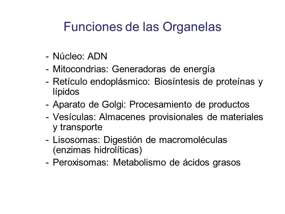 Funciones de las Organelas