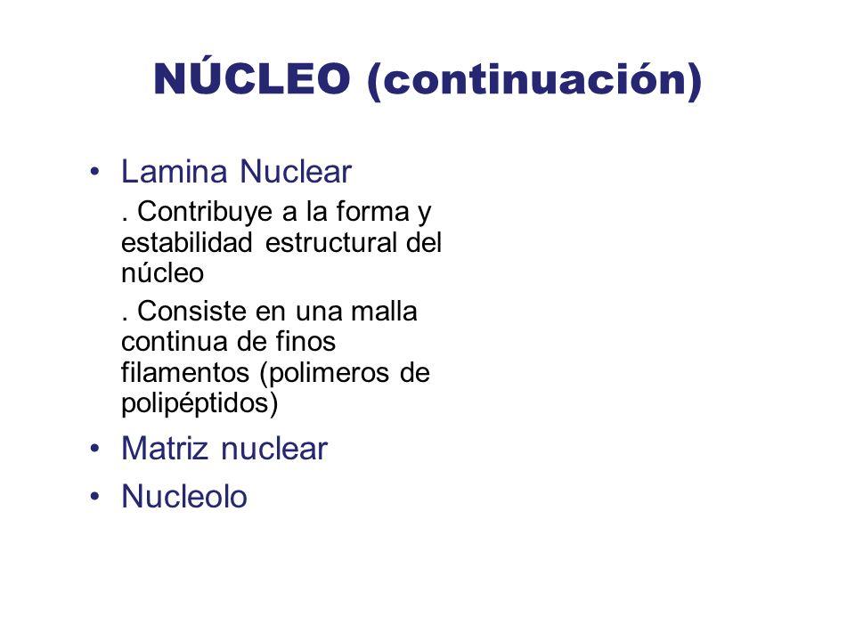 NÚCLEO (continuación)