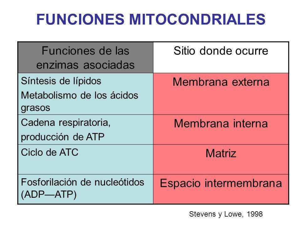 FUNCIONES MITOCONDRIALES