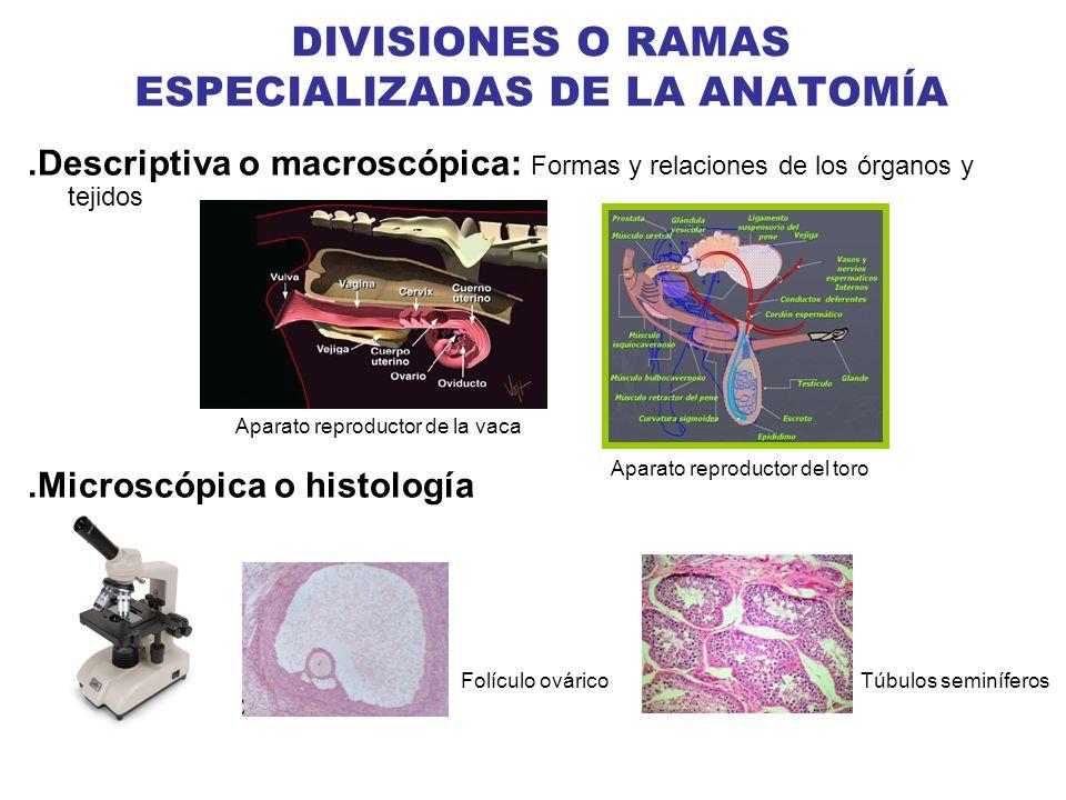 DIVISIONES O RAMAS ESPECIALIZADAS DE LA ANATOMÍA