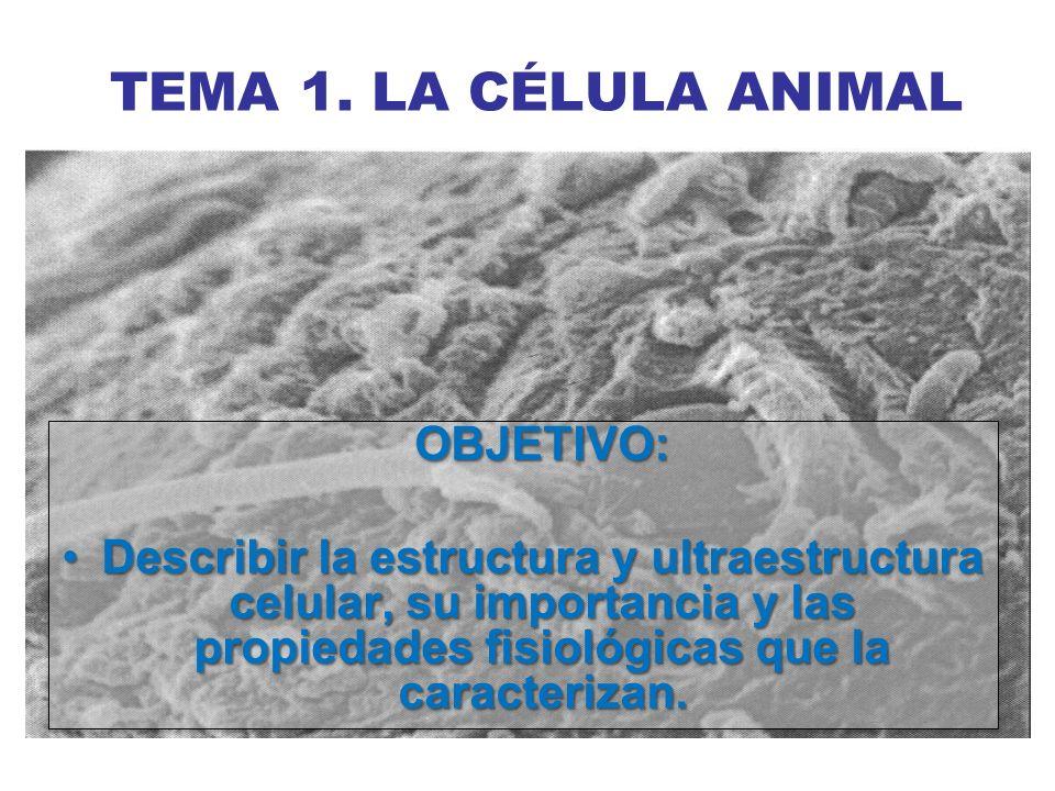 TEMA 1. LA CÉLULA ANIMAL OBJETIVO: