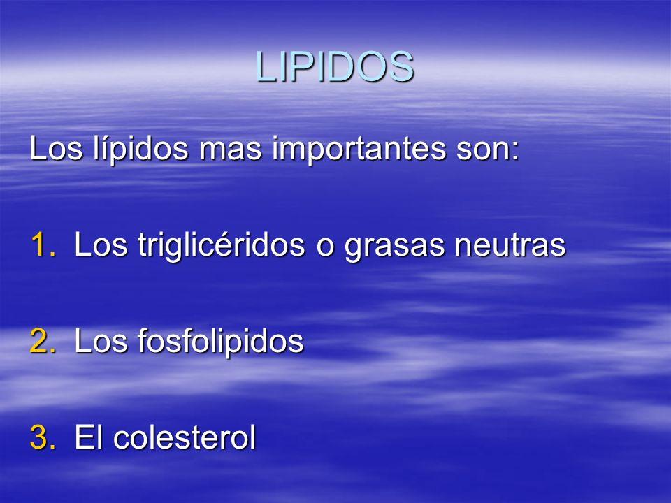 LIPIDOS Los lípidos mas importantes son: