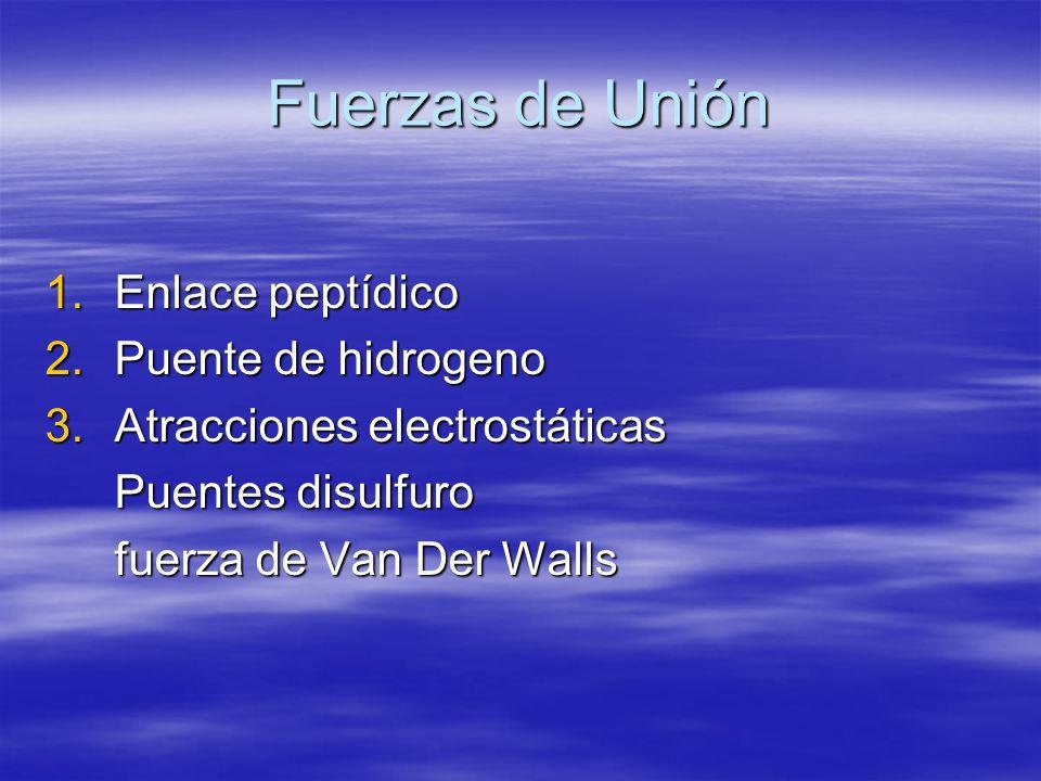 Fuerzas de Unión Enlace peptídico Puente de hidrogeno