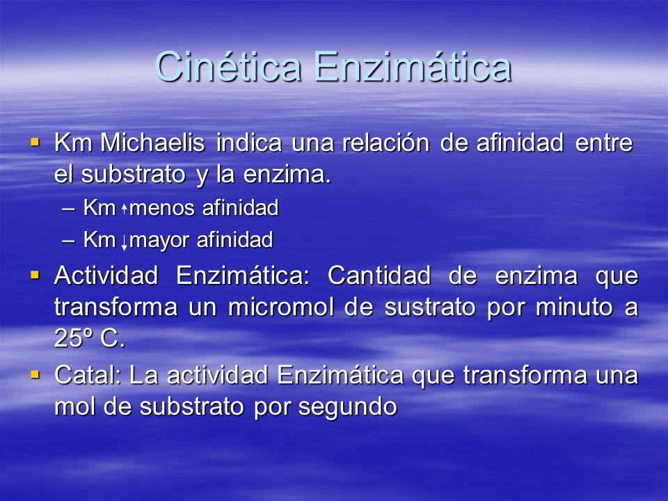 Cinética Enzimática Km Michaelis indica una relación de afinidad entre el substrato y la enzima. Km menos afinidad.