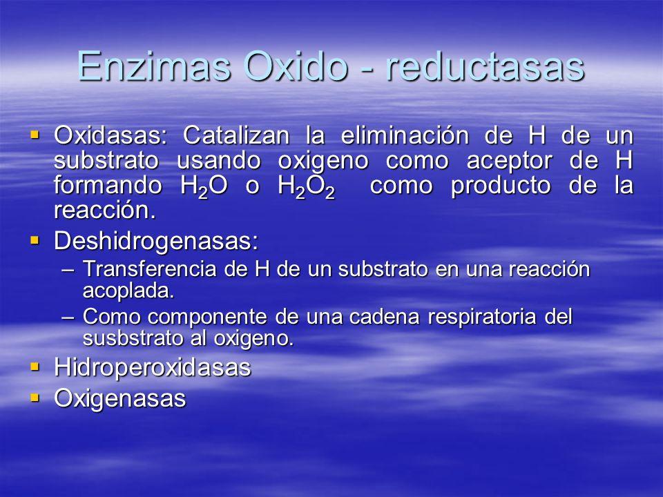 Enzimas Oxido - reductasas