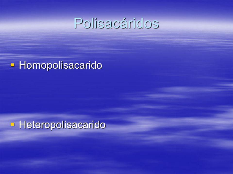 Polisacáridos Homopolisacarido Heteropolisacarido