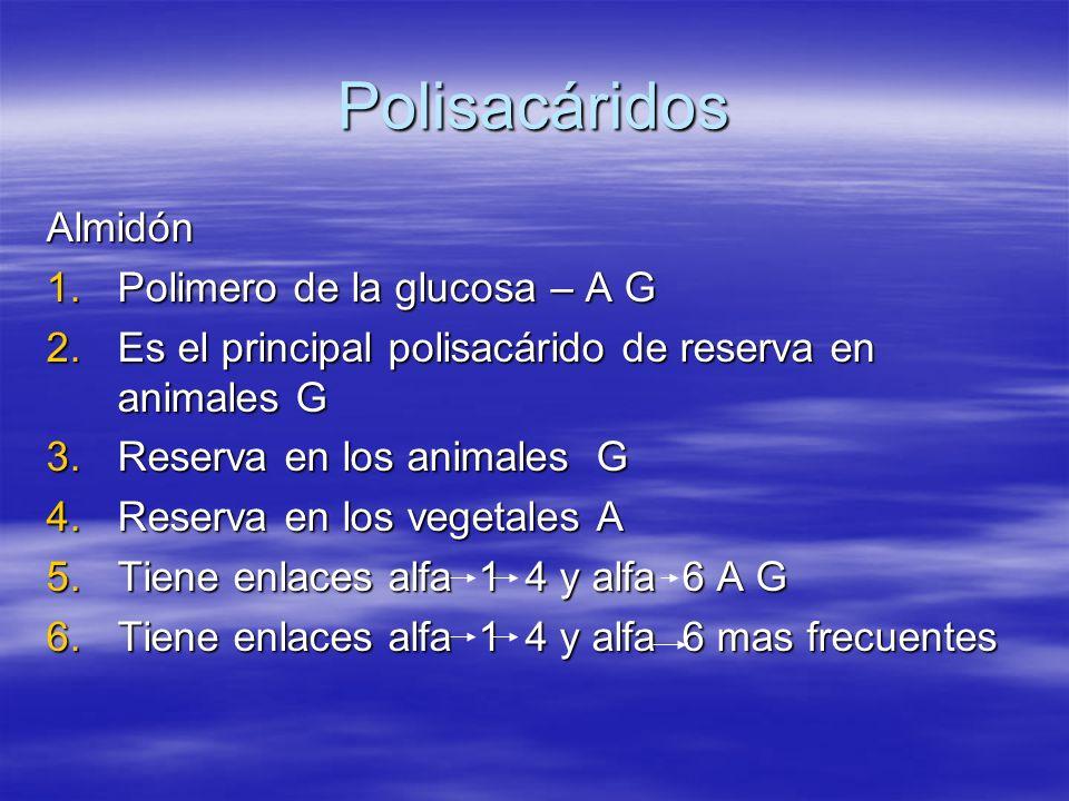 Polisacáridos Almidón Polimero de la glucosa – A G