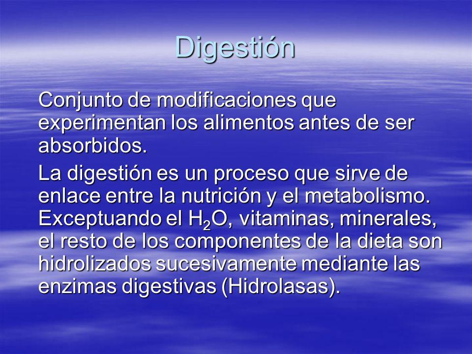 Digestión Conjunto de modificaciones que experimentan los alimentos antes de ser absorbidos.