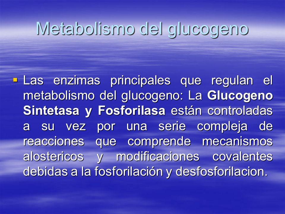 Metabolismo del glucogeno