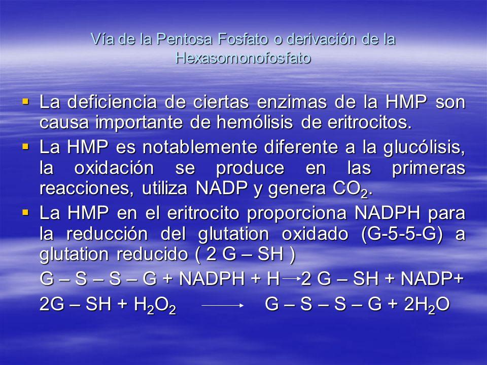 Vía de la Pentosa Fosfato o derivación de la Hexasomonofosfato