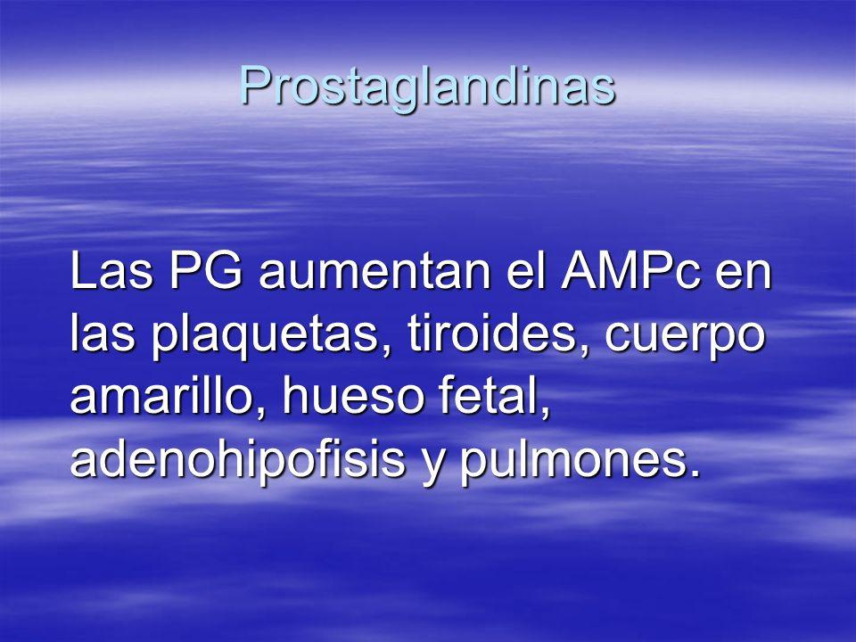Prostaglandinas Las PG aumentan el AMPc en las plaquetas, tiroides, cuerpo amarillo, hueso fetal, adenohipofisis y pulmones.
