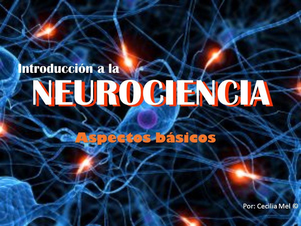 NEUROCIENCIA NEUROCIENCIA Introducción a la Aspectos básicos
