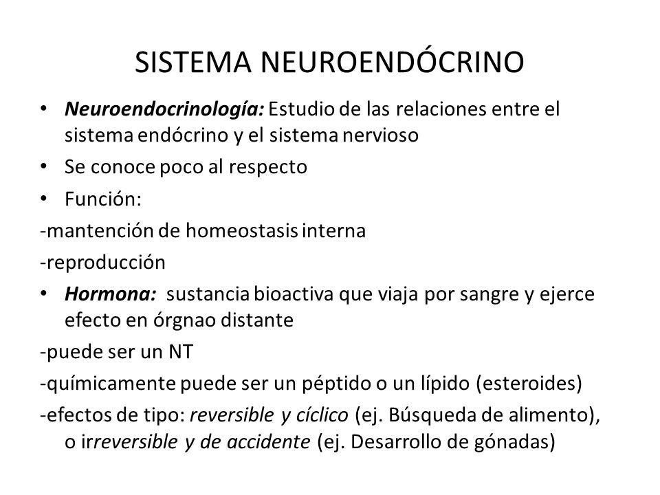 SISTEMA NEUROENDÓCRINO