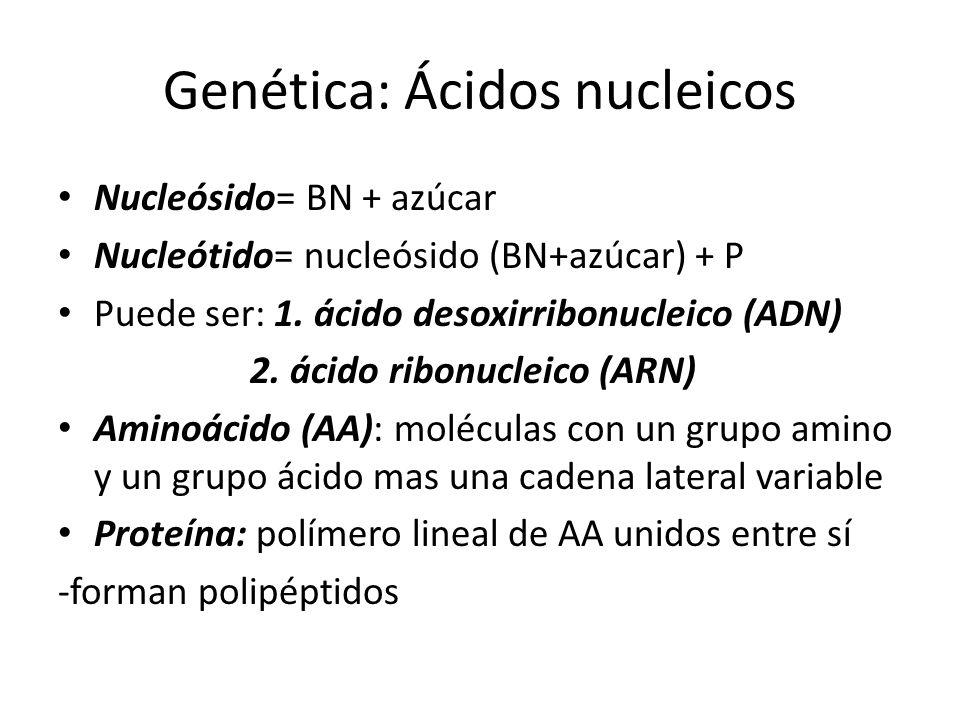 Genética: Ácidos nucleicos