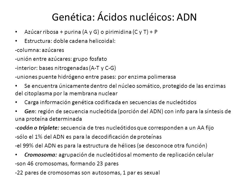 Genética: Ácidos nucléicos: ADN