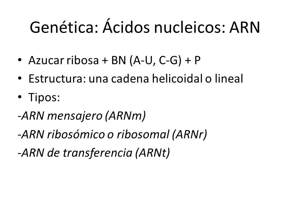 Genética: Ácidos nucleicos: ARN