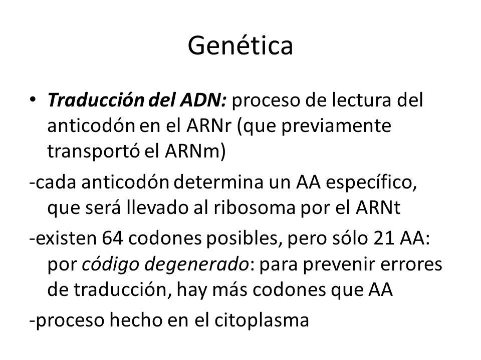 Genética Traducción del ADN: proceso de lectura del anticodón en el ARNr (que previamente transportó el ARNm)