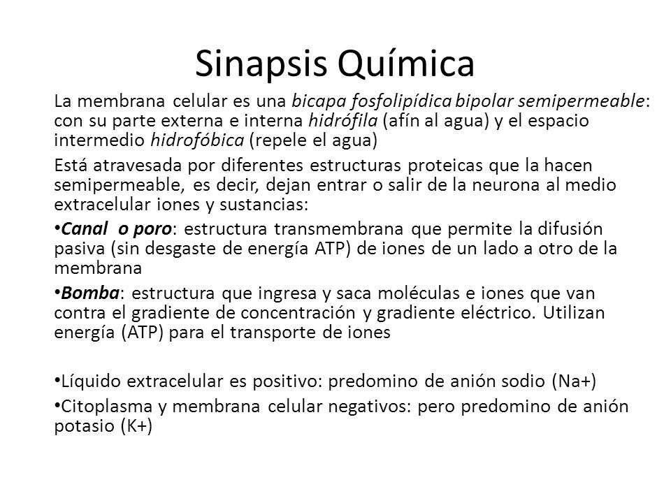 Sinapsis Química