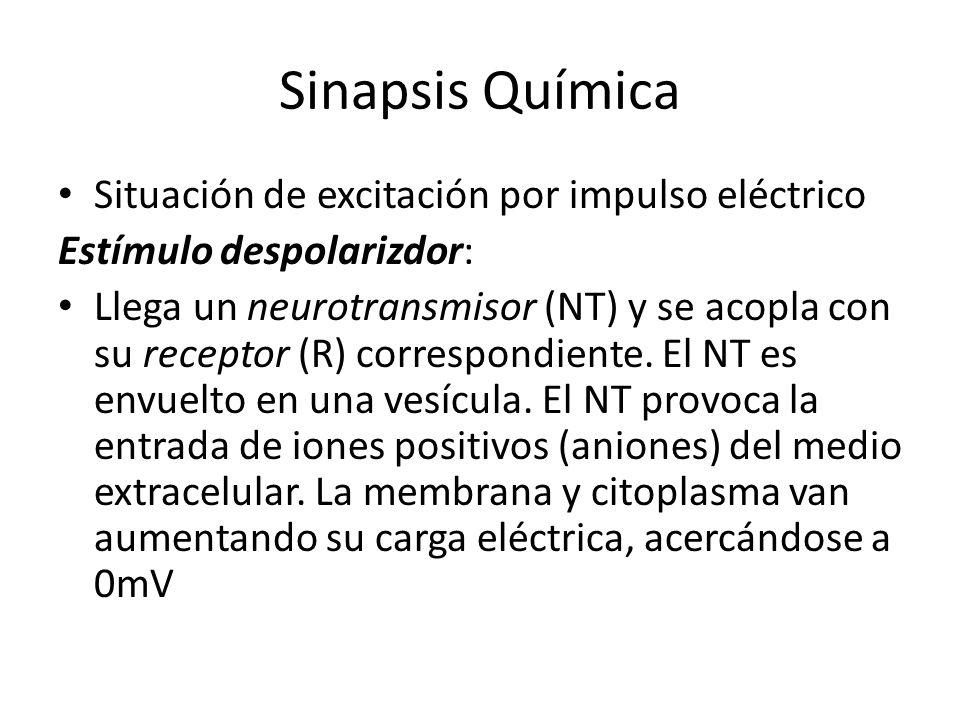 Sinapsis Química Situación de excitación por impulso eléctrico