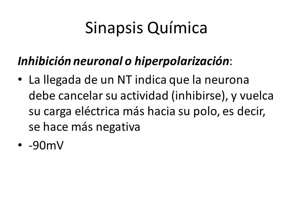 Sinapsis Química Inhibición neuronal o hiperpolarización: