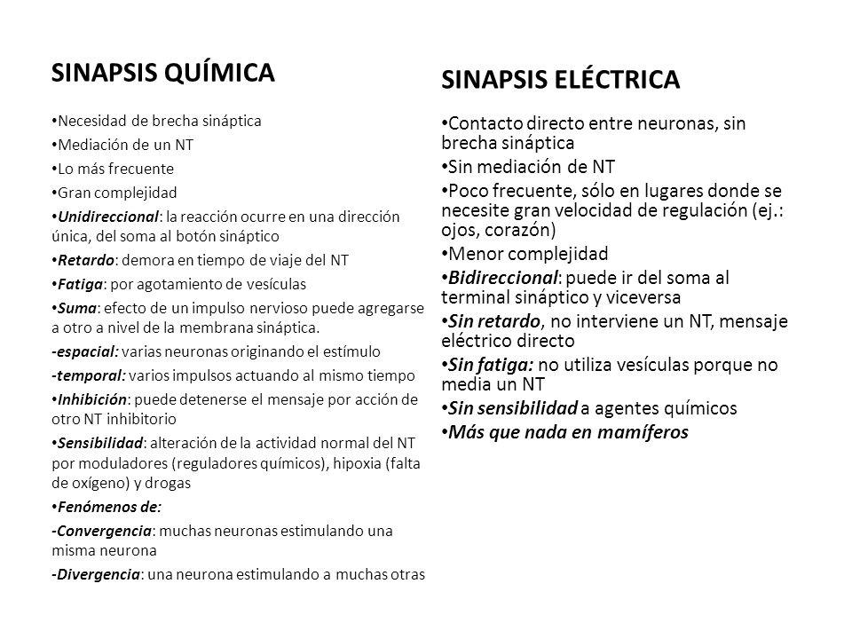 SINAPSIS QUÍMICA SINAPSIS ELÉCTRICA