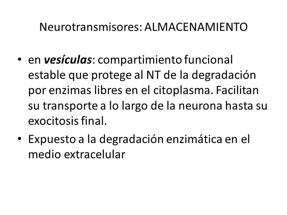 Neurotransmisores: ALMACENAMIENTO