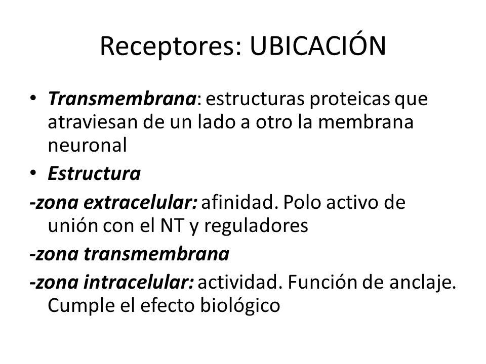Receptores: UBICACIÓN